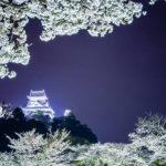 名古屋市の遅咲き桜/4月中旬から下旬に楽しむお花見スポット