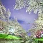 名古屋の穴場的な桜お花見スポット/名古屋市北東部
