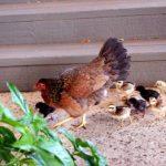 平飼い卵を買えるスーパー・販売所・店舗その3【愛知県】